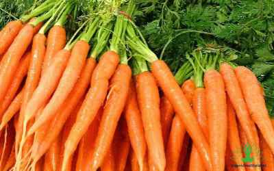 10 Amazing Facts about Carrots