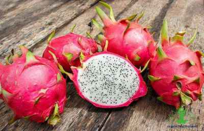 7 Surprising Facts about Dragon Fruit