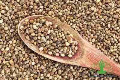 Reasons why Hemp seeds are best for you