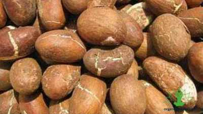 9 Benefits of a Kola nut
