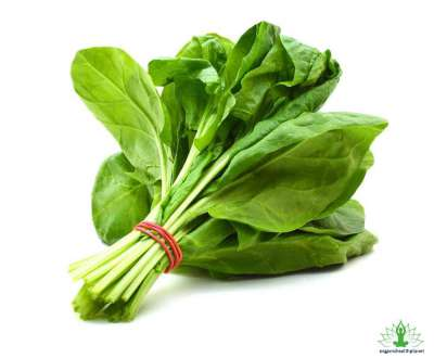 10 Surprising Facts about Spinach