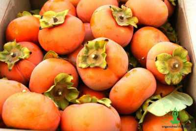 8 Best ways Persimmons Helps our Health